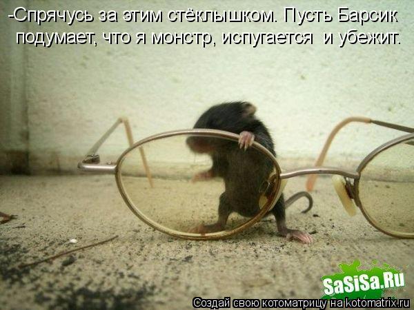 Котоматрица: -Спрячусь за этим стёклышком. Пусть Барсик  подумает, что я монстр, испугается  и убежит.