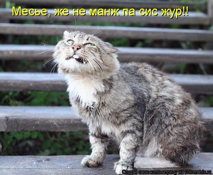 Котоматрица: Месье, же не манж па сис жур!!