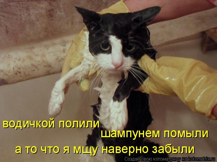 Котоматрица: водичкой полили шампунем помыли а то что я мщу наверно забыли