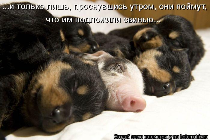 Котоматрица: ...и только лишь, проснувшись утром, они поймут,  что им подложили свинью...