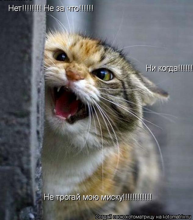 Котоматрица: Нет!!!!!!!! Не за что!!!!!! Ни когда!!!!!!!!!!!!!!!!!!! Не трогай мою миску!!!!!!!!!!!!