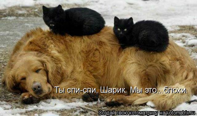 Котоматрица: Ты спи-спи, Шарик. Мы это...блохи.