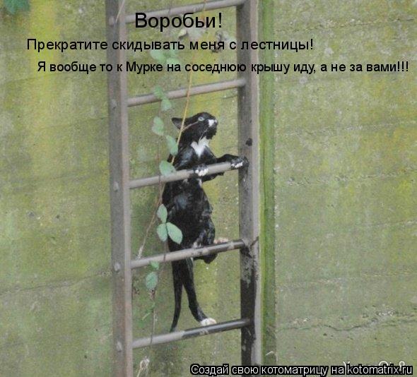 Котоматрица: Воробьи! Прекратите скидывать меня с лестницы! Я вообще то к Мурке на соседнюю крышу иду, а не за вами!!!