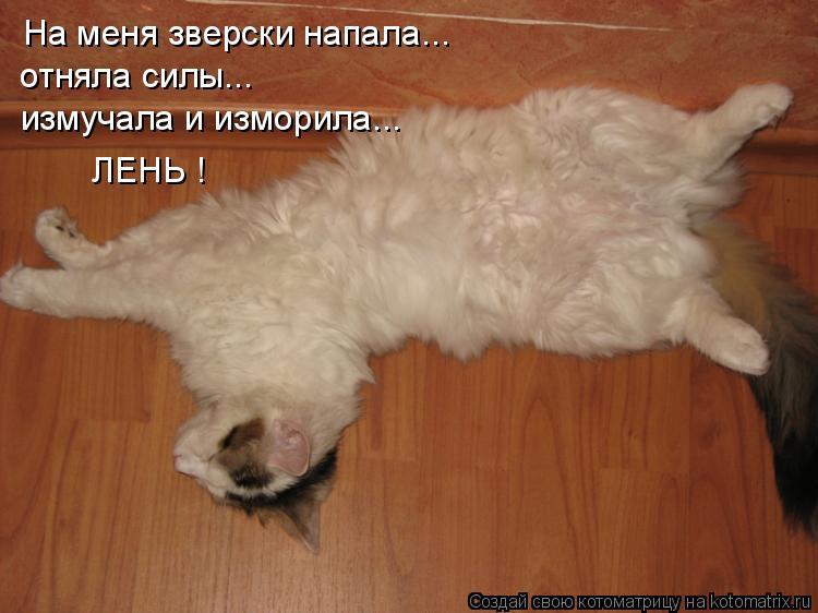 Котоматрица: На меня зверски напала... отняла силы... измучала и изморила... ЛЕНЬ !