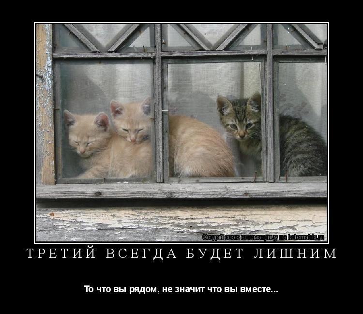 Котоматрица: третий всегда будет лишним То что вы рядом, не значит что вы вместе...