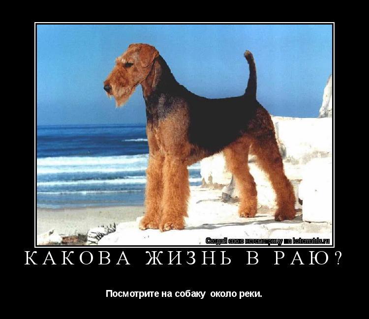 Котоматрица: Какова жизнь в раю? Посмотрите на собаку  около реки…