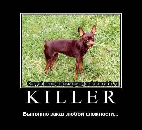 Котоматрица: KILLER Выполню заказ любой сложности...