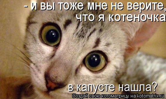 Котоматрица: - и вы тоже мне не верите, что я котеночка в капусте нашла? что я котеночка в капусте нашла? в капусте нашла?