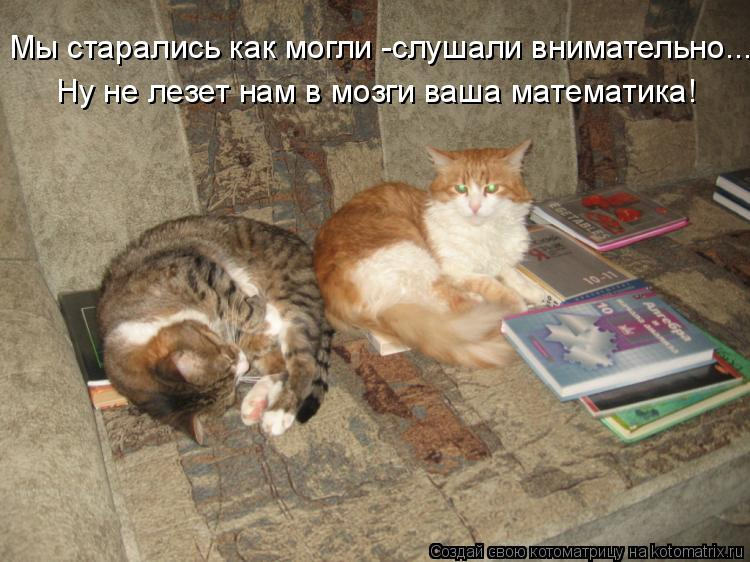 Котоматрица: Мы старались как могли -слушали внимательно... Ну не лезет нам в мозги ваша математика!