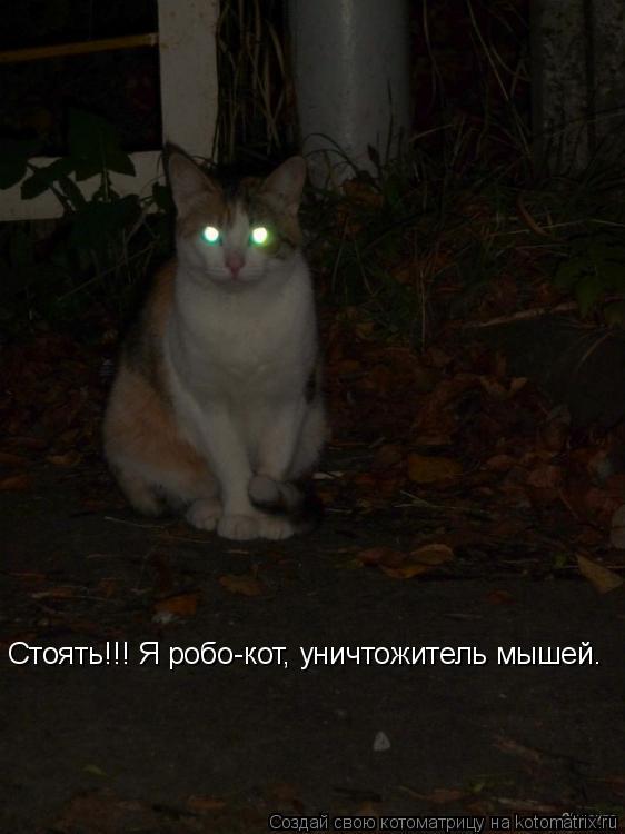 Котоматрица: Стоять!!! Я робо-кот, уничтожитель мышей.