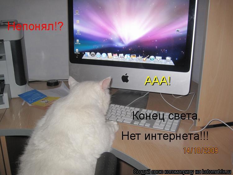 Котоматрица: Непонял!? ААА! Конец света, Нет интернета!!!
