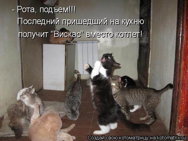 "Котоматрица: - Рота, подъем!!! Последний пришедший на кухню получит ""Вискас"" вместо котлет!"