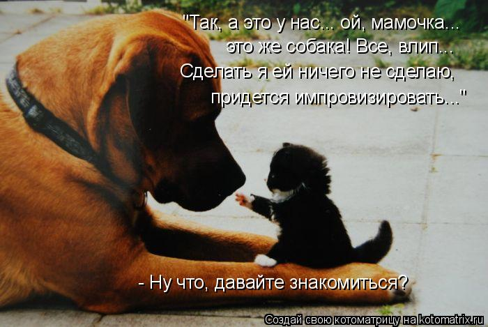 """Котоматрица: """"Так, а это у нас... ой, мамочка... это же собака! Все, влип... Сделать я ей ничего не сделаю, придется импровизировать..."""" - Ну что, давайте знакомит"""