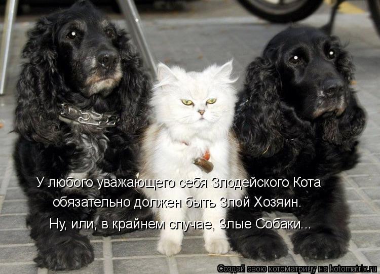 Котоматрица: У любого уважающего себя Злодейского Кота обязательно должен быть Злой Хозяин. Ну, или, в крайнем случае, Злые Собаки...