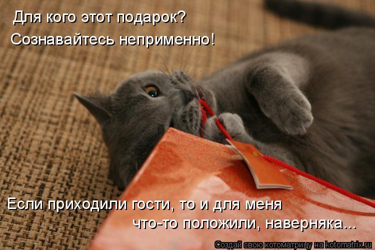 Котоматрица: Для кого этот подарок? Сознавайтесь неприменно! Если приходили гости, то и для меня что-то положили, наверняка...