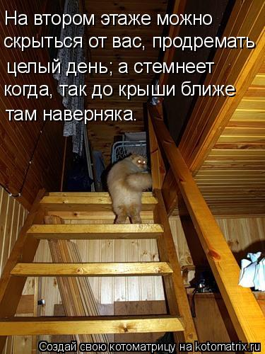 Котоматрица: На втором этаже можно скрыться от вас, продремать целый день; а стемнеет  когда, так до крыши ближе там наверняка.