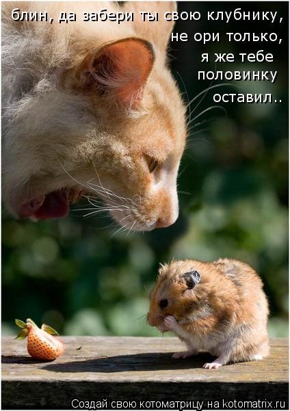 Котоматрица: блин, да забери ты свою клубнику,  не ори только,  я же тебе  половинку  оставил..