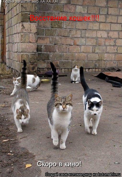 Котоматрица: Восстание кошек!!!! Скоро в кино! - Кошки захватят мир ХА ХА ХА!