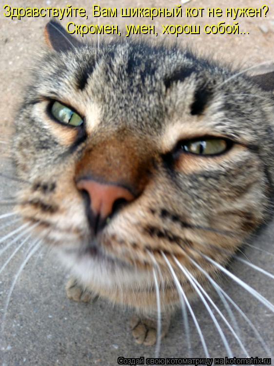 Котоматрица: Здравствуйте, Вам шикарный кот не нужен? Скромен, умен, хорош собой...