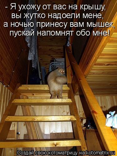 Котоматрица: - Я ухожу от вас на крышу, вы жутко надоели мене, а ночью принесу вам мышек, пускай напомнят обо мне!