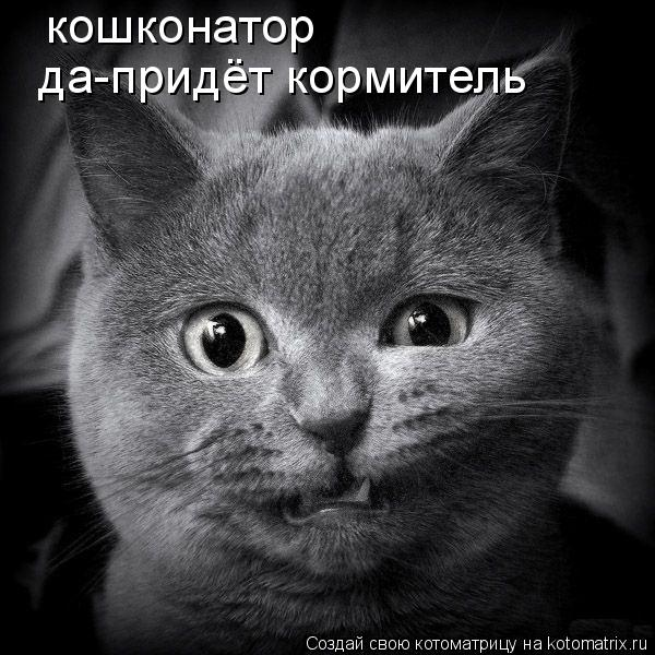 Котоматрица: кошконатор да-придёт кормитель