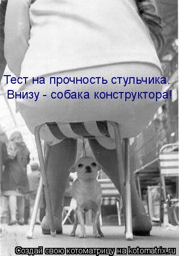 Котоматрица: Тест на прочность стульчика.  Внизу - собака конструктора!