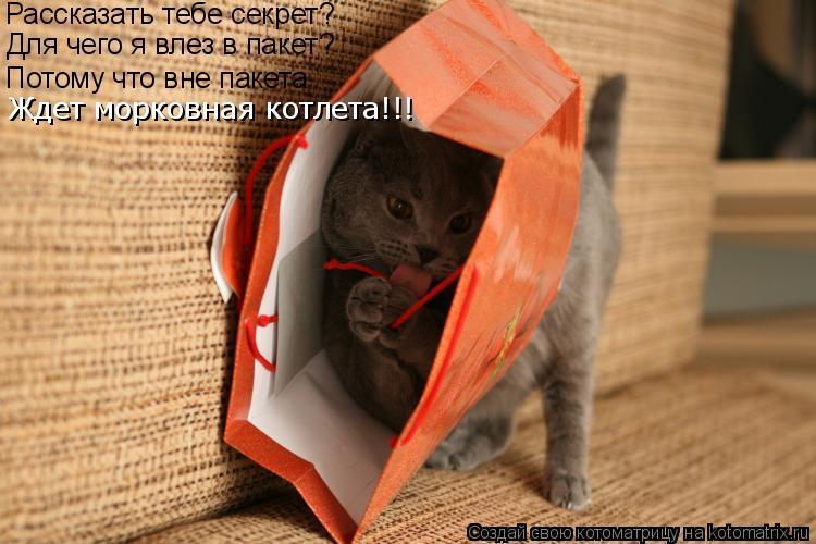 Котоматрица: Рассказать тебе секрет? Для чего я влез в пакет? Потому что вне пакета Ждет морковная котлета!!!