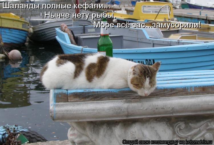 Котоматрица: Шаланды полные кефали... Нынче нету рыбы, Море всё зас...замусорили!