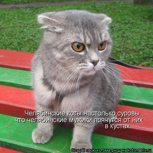 Котоматрица: Челябинские коты настолько суровы, что челябинские мужики прячутся от них в кустах.