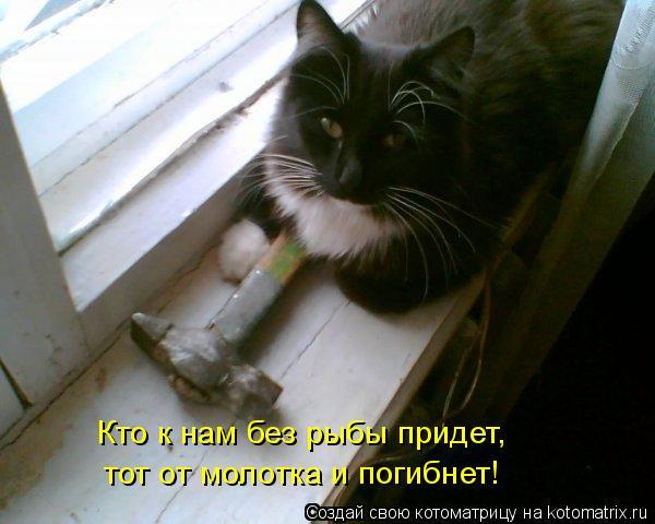 Котоматрица: Кто к нам без рыбы придет,  тот от молотка и погибнет!