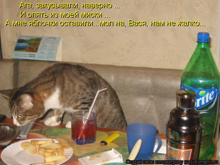 Котоматрица: Ага, закусывали, наверно ... И опять из моей миски ... А мне яблочки оставили...мол на, Вася, нам не жалко...