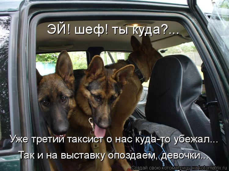 Котоматрица: ЭЙ! шеф! ты куда?... Уже третий таксист о нас куда-то убежал... Так и на выставку опоздаем, девочки...