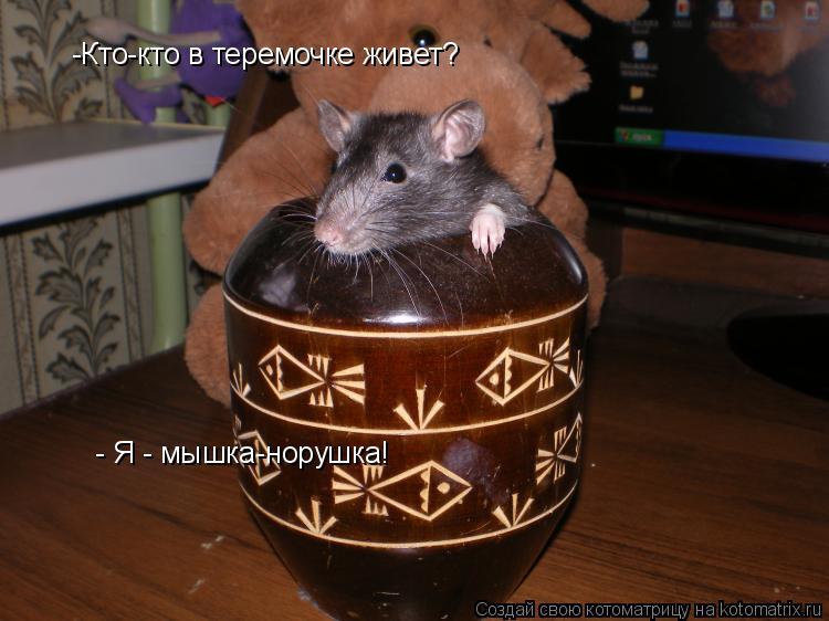 Котоматрица: -Кто-кто в теремочке живет?  - Я - мышка-норушка!