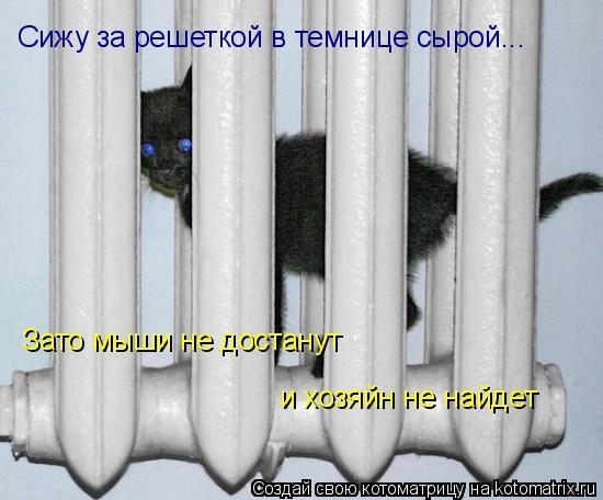 Котоматрица: Сижу за решеткой в темнице сырой... Зато мыши не достанут  и хозяйн не найдет