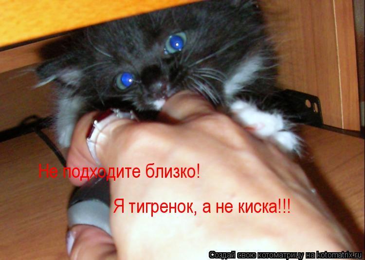Котоматрица: Не подходите близко!  Я тигренок, а не киска!!!