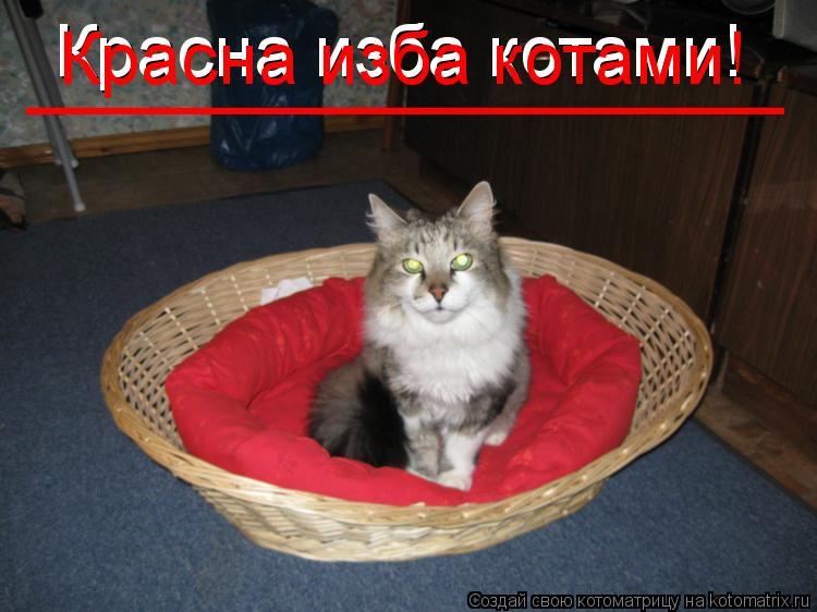 Котоматрица: Красна изба котами! Красна изба котами! _____________