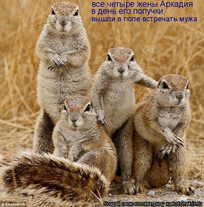 Котоматрица: все четыре жены Аркадия в день его получки вышли в поле встречать мужа