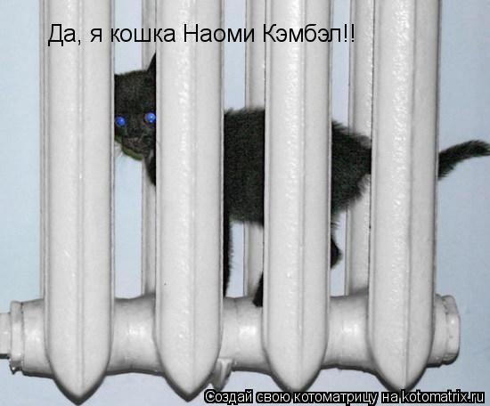 Котоматрица: Да, я кошка Наоми Кэмбэл!!