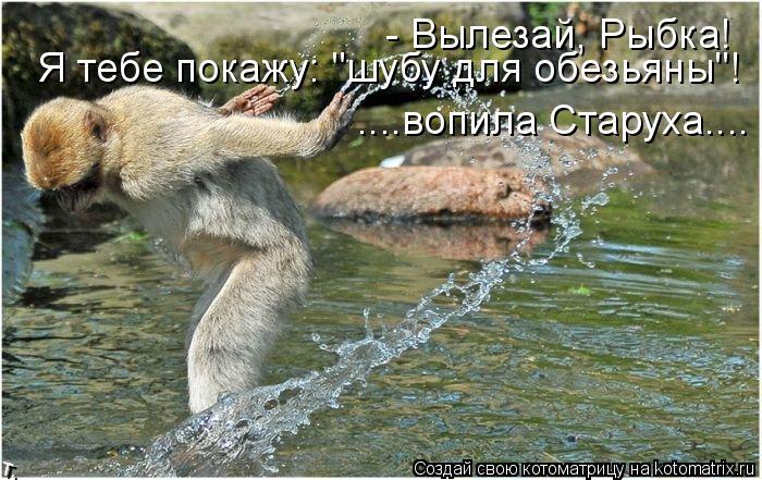 """Котоматрица: - Вылезай, Рыбка! Я тебе покажу: """"шубу для обезьяны""""! ....вопила Старуха...."""