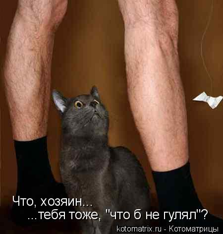 "Котоматрица: Что, хозяин... ...тебя тоже, ""что б не гулял""?"
