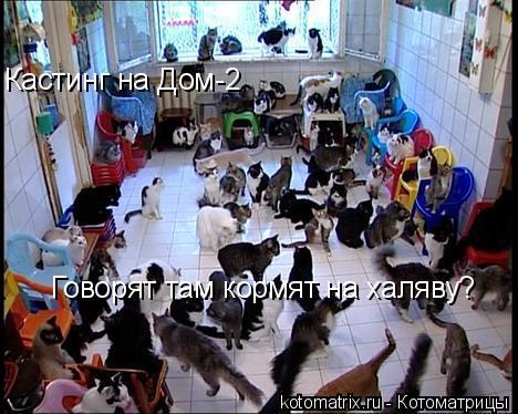 Котоматрица: Кастинг на Дом-2 Говорят там кормят на халяву?