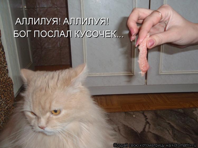 Котоматрица: АЛЛИЛУЯ! АЛЛИЛУЯ! БОГ ПОСЛАЛ КУСОЧЕК...