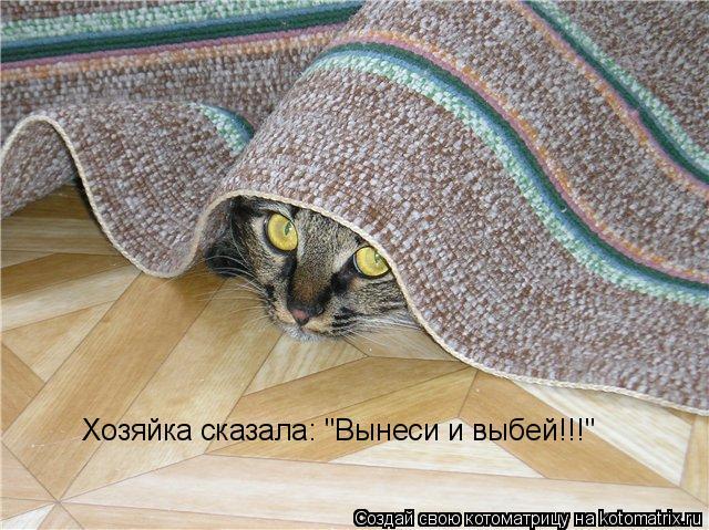 """Котоматрица: Хозяйка сказала: """"Вынеси и выбей!!!"""""""