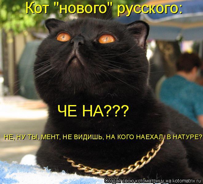 """Котоматрица: Кот """"нового"""" русского: ЧЕ НА???  НЕ, НУ ТЫ, МЕНТ, НЕ ВИДИШЬ, НА КОГО НАЕХАЛ, В НАТУРЕ?"""