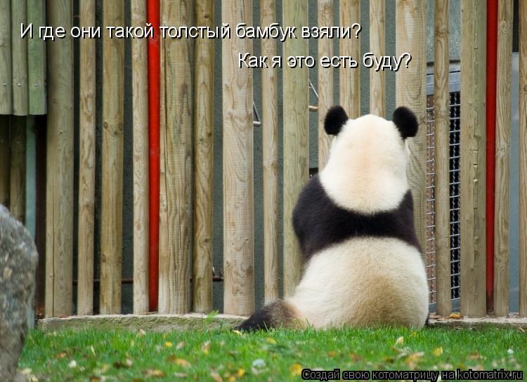 Котоматрица: И где они такой толстый бамбук взяли? Как я это есть буду?