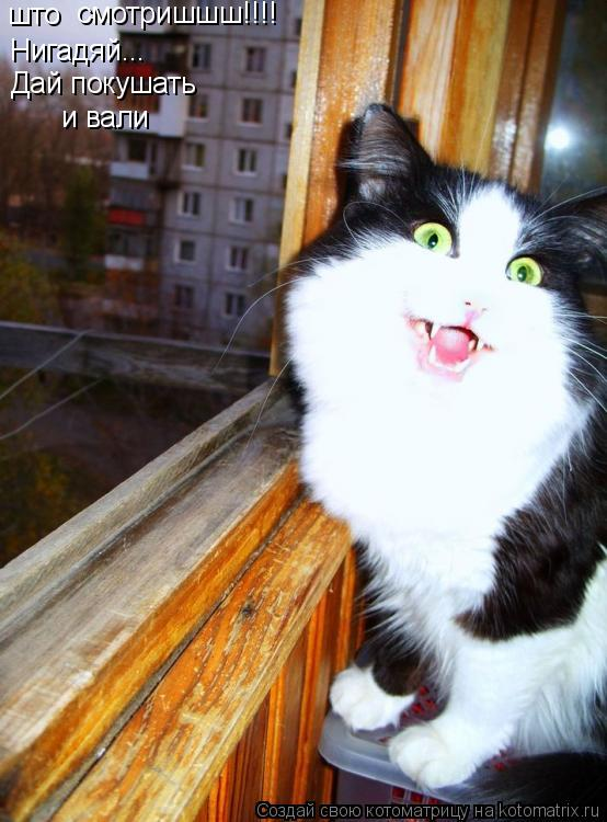 Котоматрица: што смотришшш!!!! Нигадяй... Дай покушать  и вали