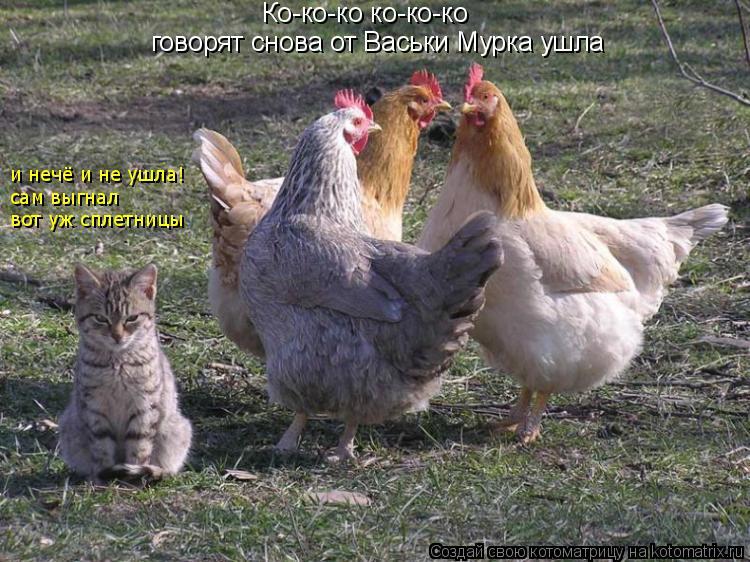 Котоматрица: Ко-ко-ко ко-ко-ко  говорят снова от Васьки Мурка ушла и нечё и не ушла!  сам выгнал  вот уж сплетницы