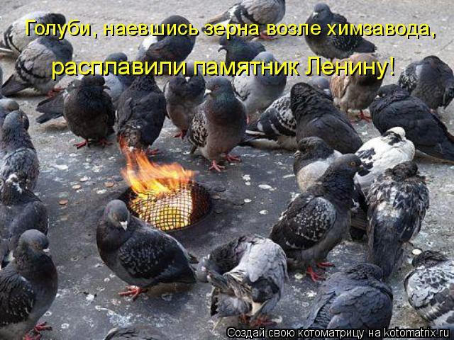 Котоматрица: расплавили памятник Ленину! Голуби, наевшись зерна возле химзавода,