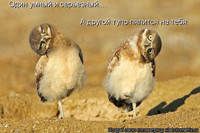 Котоматрица: Один умный и серьёзный.... А другой тупо пялится на тебя