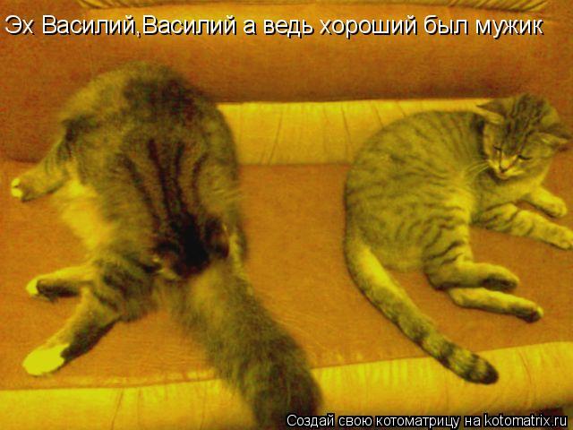 Котоматрица: Эх Василий,Василий а ведь хороший был мужик